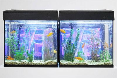 Figure6TVFish.jpg