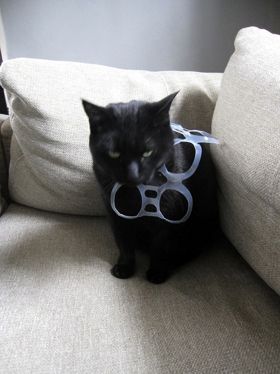 plastic six-pack holder cat necklace.jpg