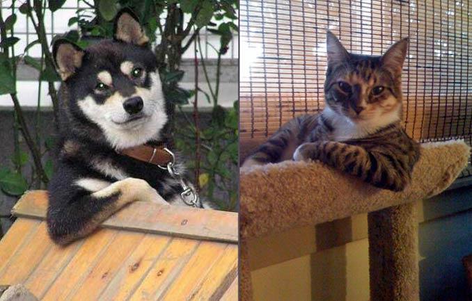 cool-cat-cool-dog.jpg
